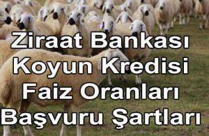 7 Yıl Vadeli Ziraat Bankası Faizsiz Koyun Kredisi! (FAİZSİZ!)