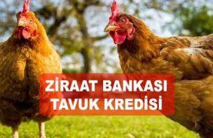 Ziraat Bankası Tavuk Kredisi (SALMA & GEZER DAHİL)
