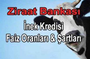 Ziraat Bankası İnek Kredisi 2021 (2 Yıl Ödemesiz 7 Yıl Vadeli)