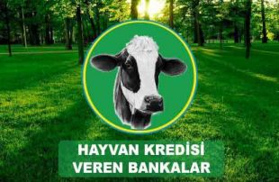 Hayvan Kredisi Veren En İyi Bankalar'dan 5 Tanesi!