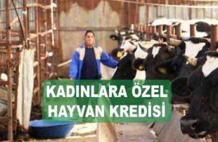 Ziraat Bankası Kadın Çiftçilere Hayvan Kredisi (Bayanlara Özel Faizler)