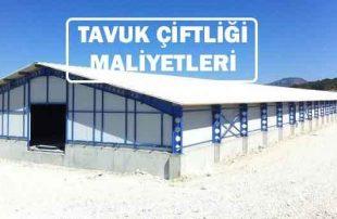 20.000 50.000 Kapasiteli Tavuk Çiftliği Maliyeti (Prefabrik Çadır Dahil)