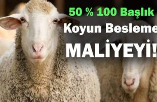 50 100 Başlık Koyun Besleme Yıllık Maliyeti (Ne Kazandırır, Kaç Metreye Sığar)
