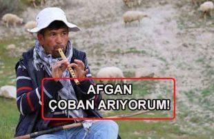Afgan Özbek Suriyeli Çoban Arıyorum Diyenlere İlanlar!