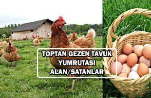 Toptan Köy Yumurtası Alan Satan Firmalar (2 ile 3 TL)
