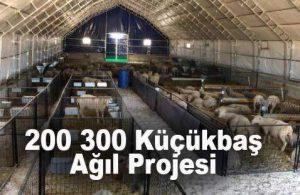 200 300 Başlık Modern Damızlık Koyun Keçi Çiftlik Projesi