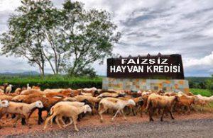 Faizsiz Hayvancılık Kredisi Veren 1 Banka Var! Hangisi Mi?